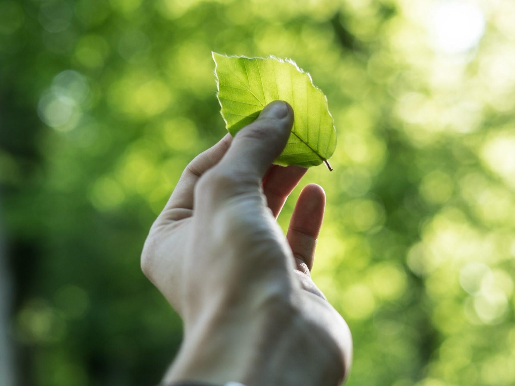 Grünes Blatt mit den Fingern festhalten